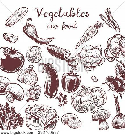 Serve Vegetables. Hand Drawn Vintage Engraving Illustration For Poster, Labels And Cafe Or Restauran