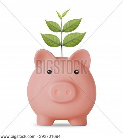 Business Investment And Saving Growth For Advertising Concept. Plant Growing On Piggy Bank On Isolat