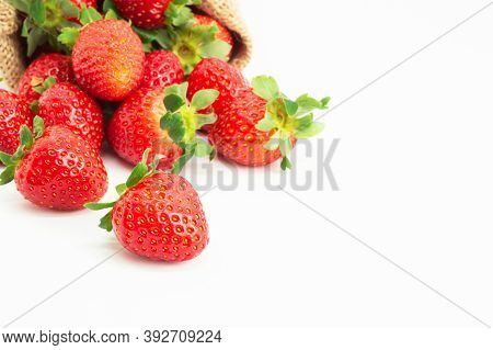 Strawberries In Burlap Sack Isolated On White Background, Garden Summer Fruit, Strawberry, Copy Spac