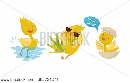 Cute Yellow Duckling Swimming In Water, Hatching And Wearing Sunglasses Vector Set