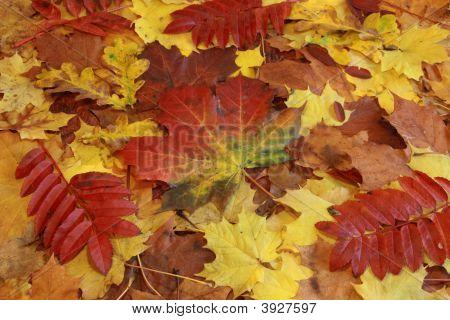 Colourful Autumn Foliage Background