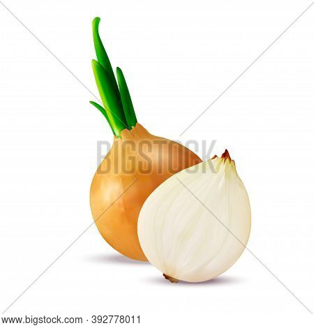 Realistic Detailed 3d Fresh Vegetable Onions Slices And Whole Set. Vector Illustration Of Onion Bulb