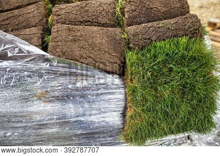 Fresh Stacks Of Sod Rolls On Pallet For New Lawn. Selective Focus.