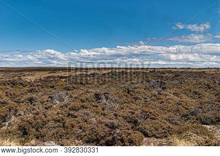 Falkland Islands, Uk - December 15, 2008: Wide Windswept Bare Landscape Of Dry Land With Brown Low B