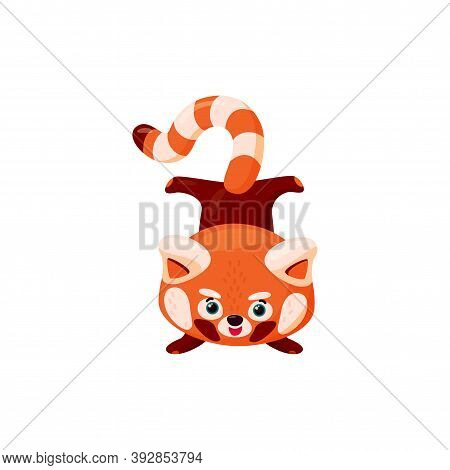Red Panda Handstand. Cute Baby Red Panda Standing Upside Downisolated In White Background. Vector Il