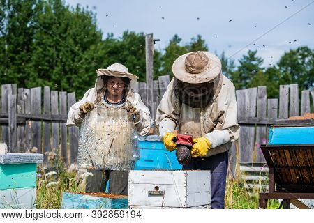 Man In A Protective Suit Beekeeper Uses Device For Smoke Fumigation To Calm Bees In Hives And Check