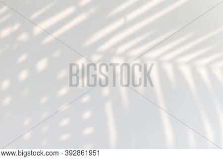 Tropical palm leaves shadow on a white wall