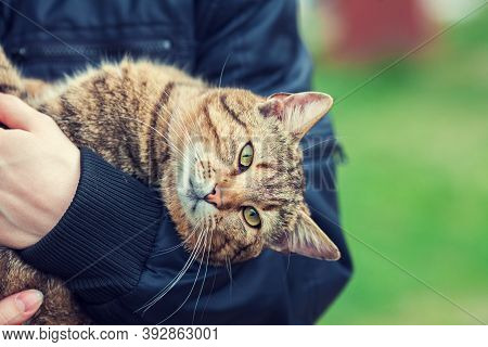 Woman Holding A Stray Cat Outdoor In Autumn