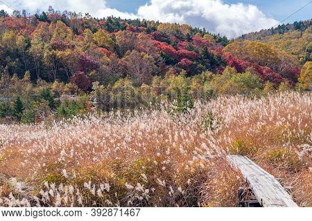 Autumn fall foliage Mountain at Mt.Bandai in Fukushima Tohoku Japan