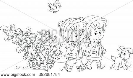 Happy Little Kids Carrying A Snowy Fir Tree On A Small Sled To Decorate It To Christmas, Black And W