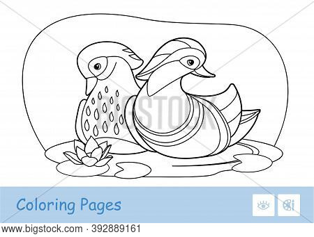 Colorless Vector Contour Image Of Two Mandarin Ducks Floating On A Forest River Isolated On White Ba