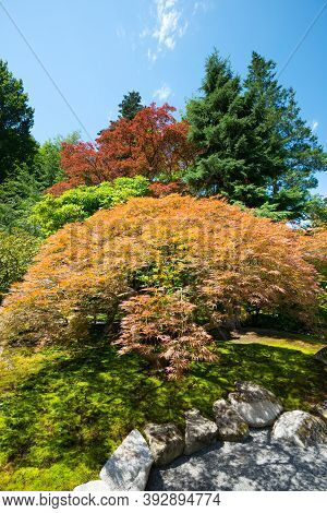 Japanese Garden At Washington Park Arboretum, Seattle, Washington State, United States