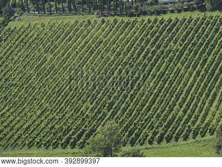 Tractor Use In Wine Growing