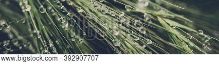 Rain Drops On Green Grass Background
