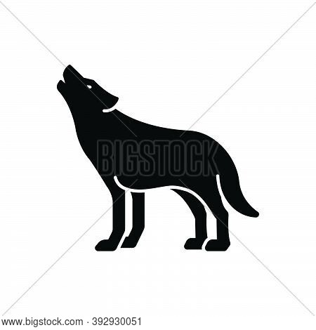 Black Solid Icon For Wolf Howl Wilderness Fox Canine Danger Jackal Carnivorous Nature Animal Jungle