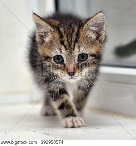 Cute Little Striped With White Kitten On Window Sill At Home