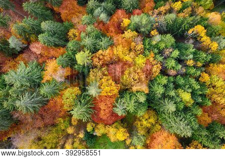 Aerial View Of Forest In Autumn With Colorful Trees. Drone Photo Picture From Above.
