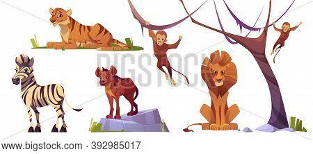 Cartoon Wild Animals Tiger, Monkeys, Hyena, Zebra And Lion With Ape. Jungle Inhabitants Predators An