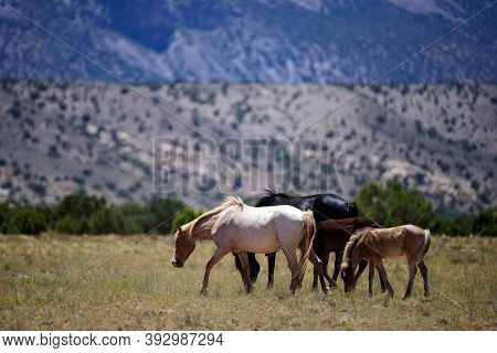 The Wild Horses. A Herd Of Horses In The American Mountains. National Park, Usa