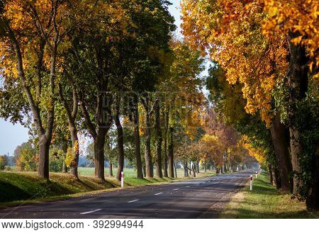 Paved Asphalt Road Goes Through Forest With Autumn Trees In Rural Locality With Concrete Bollards. S