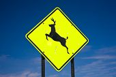 Yellow road sign deer crossing USA - blue sky poster
