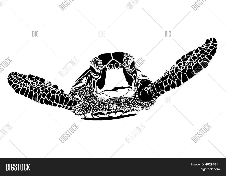 Vector Y Foto Silueta De Tortuga Prueba Gratis Bigstock