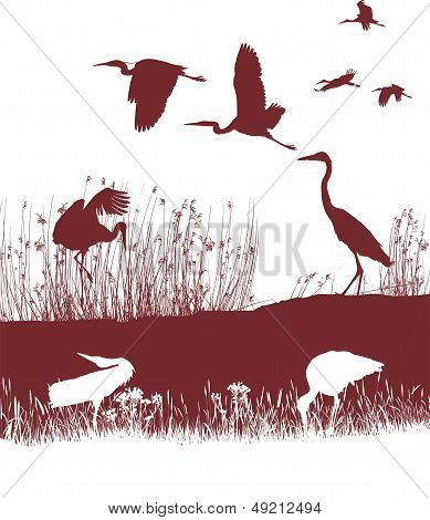 Storks and Herons on the shore