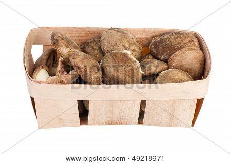 Wooden basket with shiitake mushrooms