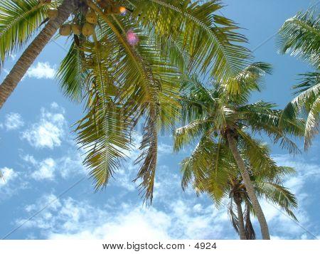 Tree Tops Bahamas