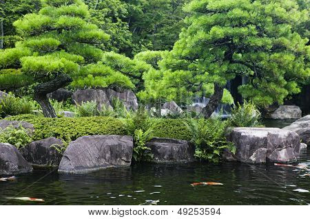 Japan Himeji Himeji Koko-en Gardens pond with Koi Carps