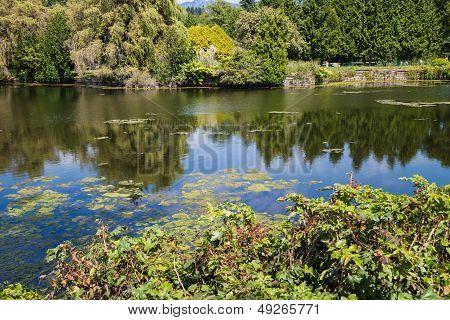 Pond At Ambleside Park
