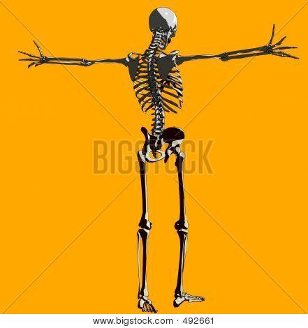 Bone 140