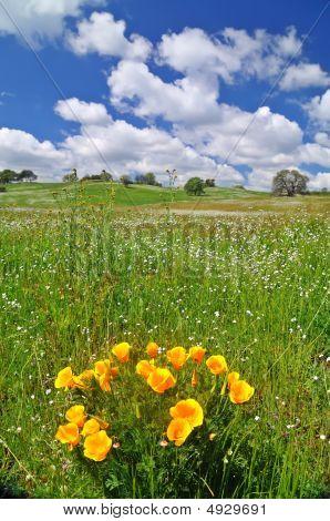 Field In Springtime