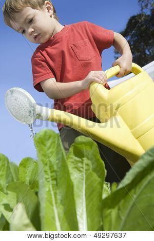 Low angle view of a little boy in vegetable garden with watering can