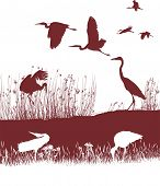 vector illustration of a flock of storks herons on the shore poster