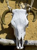 A bulls skull used as decoration on a cottage house poster