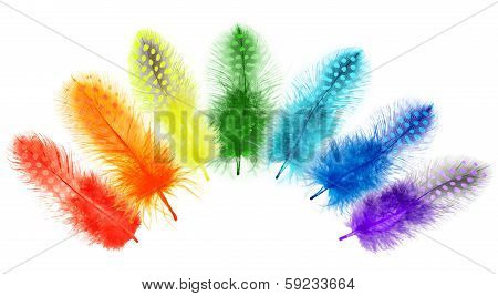 Guinea Fowl Feathers Are Painted In Bright Colors Of The Rainbow On A White Background.