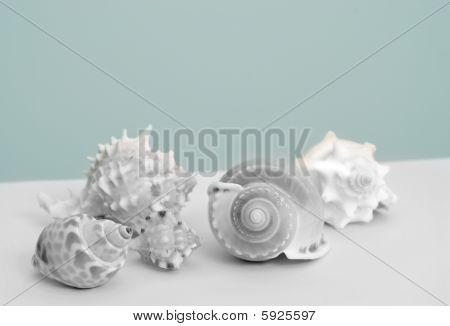Illustration of sea shells in black and white on blue background