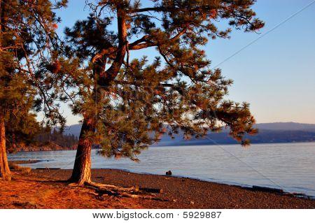 Tree At The Lake Shore