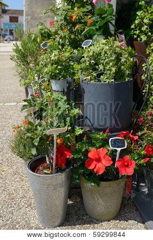 Flower shop in Aitre, Poitou-Charentes, France