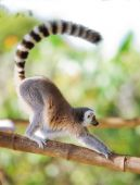 The long tailed monkey having fun in a tree poster