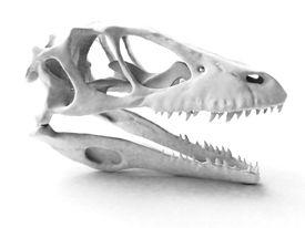 Dinosaur head