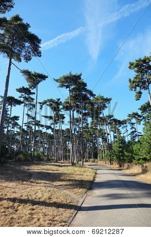 A walking path in the Bois de Boulogne in Paris. Tall pine trees cast long shadows