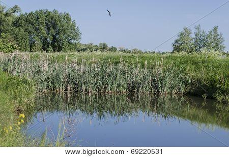 Pond in the village
