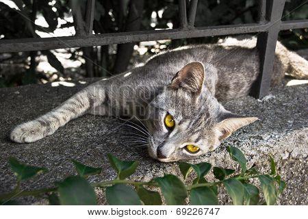 Yellow eyed kitten relaxing