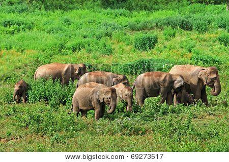 Asia wild elephent at Kui buri Nation Park, Prachuap Khiri Khan Province, Thailand. poster