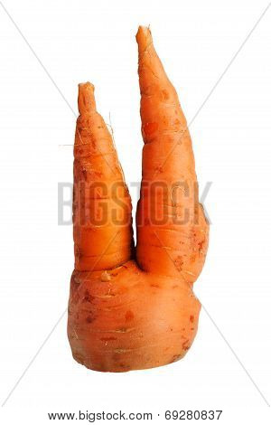 Bifurcated Crooked Carrot