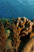 hard tube coral with blue water colum poster