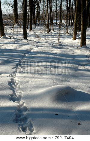 Animal tracks in snowy forest