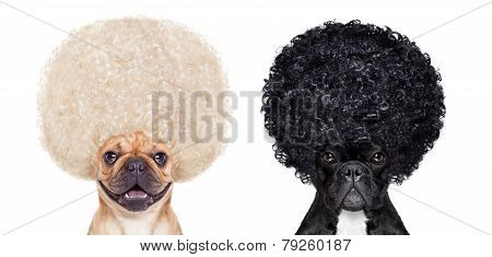Good And Bad Dogs